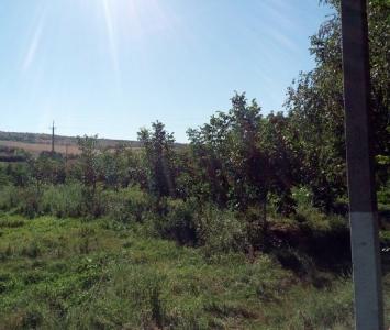 Захарівський ліцей - Горіховий сад