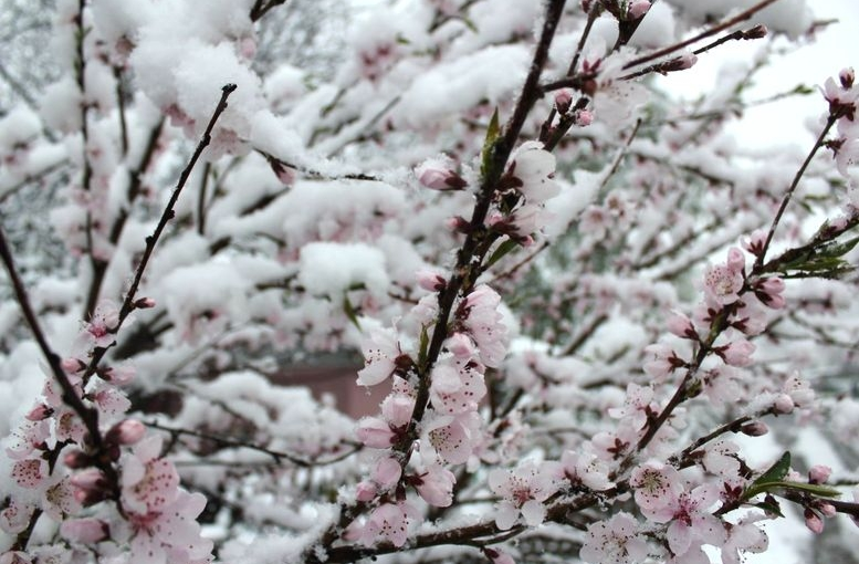 Північ області засипало снігом - 101