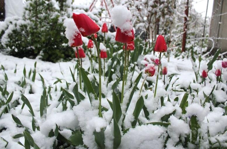 Північ області засипало снігом - 102