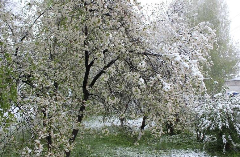 Північ області засипало снігом - 104