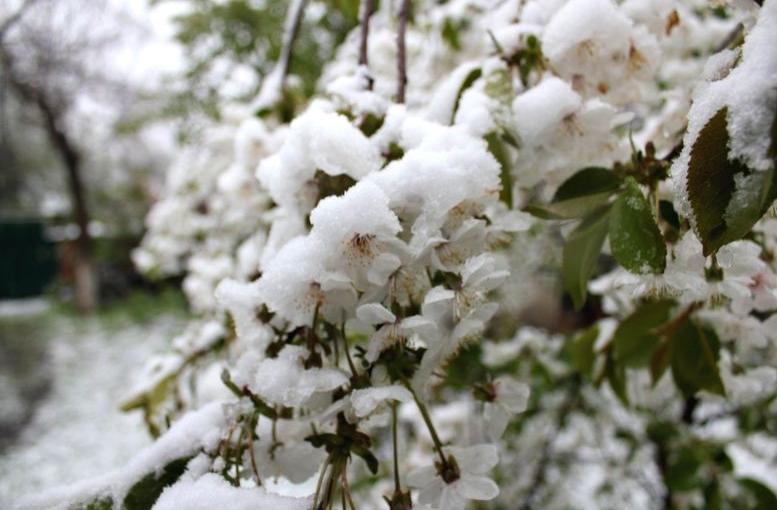 Північ області засипало снігом - 106