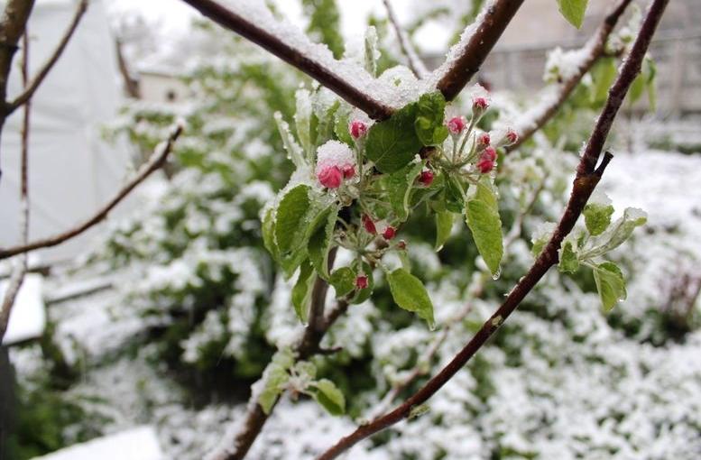 Північ області засипало снігом - 107