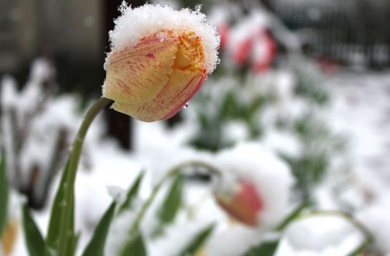 Північ області засипало снігом - 109