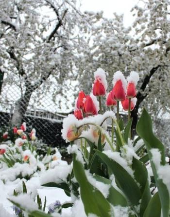 Північ області засипало снігом - 02