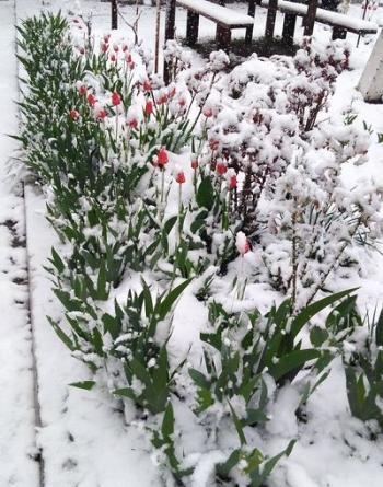 Північ області засипало снігом - 03