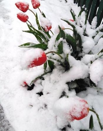 Північ області засипало снігом - 04