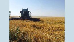 жатва ранних зерновых