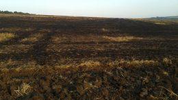вигорання сільськогосподарських угідь