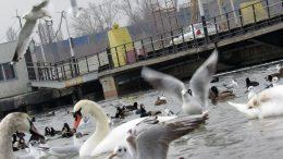 Мостовий перехід до Чорноморська