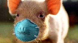 африканська чуми свиней - профілактика