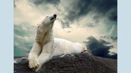 фотовиставка «Подорож доброго ведмедя» - Одеса