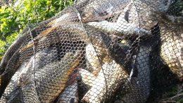 незаконная перевозка рыбы - Измаил