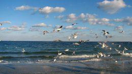 підготовка до Водохреща - Одеса - пляжі