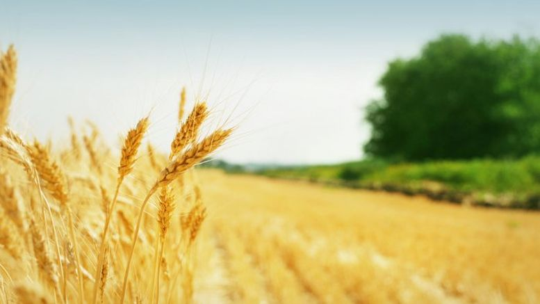 підтримка аграрного сектору