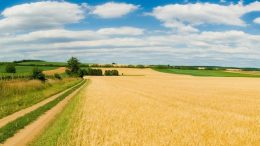 торги з продажу прав оренди - земельні ділянки