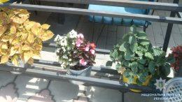 кража - вазоны с цветами - Измаил - полиция