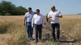 збирання ранніх зернових та зернобобових культур - Одещина